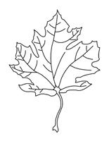 Bricolage - La famille feuilles d'érable