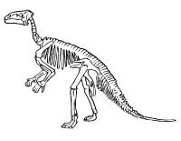 Bricolage - Os de dinosaure