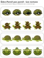Éduc-Pareil pas pareil-Les tortues