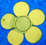 Fleurs en papier magique-8