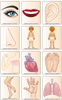 Jeu d'images-Le corps humain
