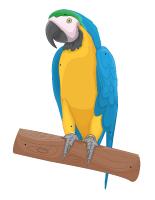 Les perroquets activit s pour enfants educatout - Perroquet en dessin ...