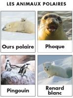 Les animaux polaire activit s pour enfants educatout - Animaux pole nord ...