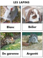 Poni découvre et présente-Les lapins