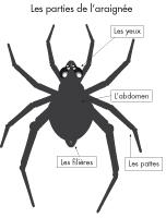 Poni présente - Les araignées