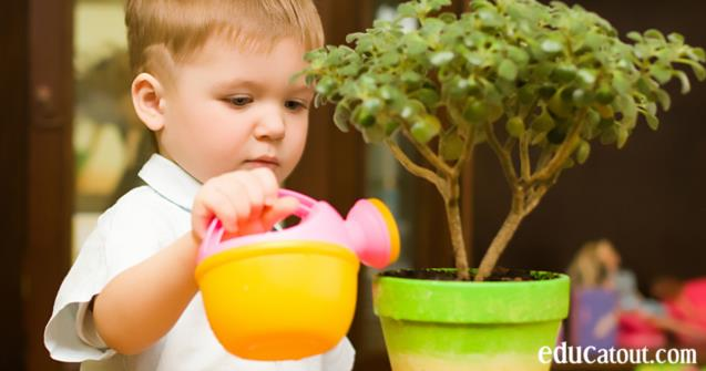 Les bienfaits des plantes dans vos locaux educatout for Dans vos locaux