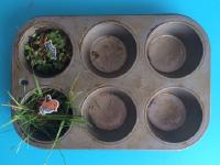 25 idées de choses à faire avec un moule à muffins-6