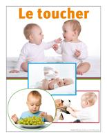 Affiche thématique poupons-Le toucher
