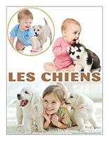 Affiche thematique-poupons-Les chiens