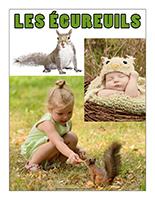 Affiche thématique poupons-Les écureuils