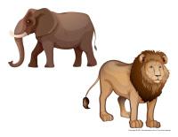 Animaux en safari-2