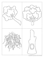 Arbre en sections