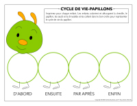 Cycle de vie Papillons