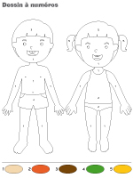 Dessin à Numéros-Le corps humain
