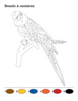 Dessin à Numéros-Les perroquets