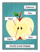 Éduc-affiche-La pomme