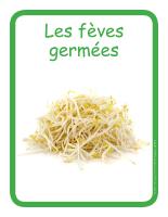 Éduc-affiche-Les fèves germées