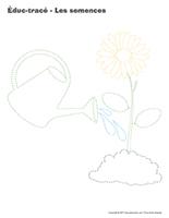 Éduc-tracé-Les semences