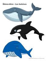 Éduca-déco-Les baleines