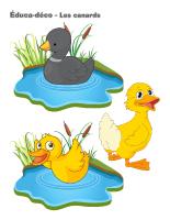 Éduca-déco-Les canards