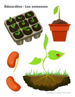 Éduca-déco-Les semences-2