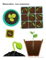 Éduca-déco-Les semences