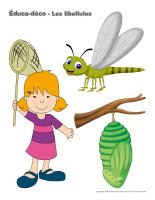 Éduca-déco-les libellules-1