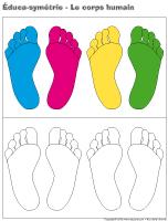 Éduca-symétrie-Le corps humain