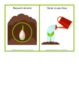 Étapes pour semer une graine-2