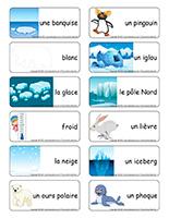 Étiquettes-mots-Animaux polaires