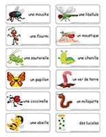 Étiquettes-mots-Insectes