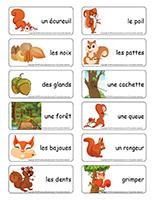 Étiquettes-mots-Les écureuils