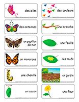 Étiquettes-mots-Papillons