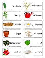 Étiquettes-mots-Plantes