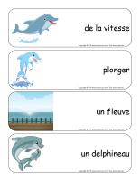 Étiquettes-mots géants-Dauphins-3