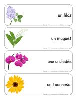 Étiquettes-mots géants-Fleurs-lecture