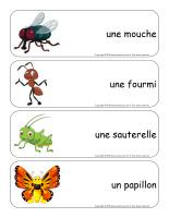 Étiquettes-mots géants-Insectes-1