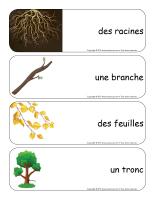 Étiquettes-mots géants-Les arbres-1