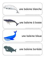 Étiquettes-mots-géants-Les baleines