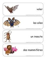 Étiquettes-mots géants-Les chauvesouris-2
