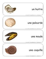 Étiquettes-mots géants-Les coquillages