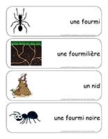 Étiquettes-mots-géants-Les fourmis