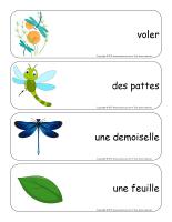 Étiquettes-mots géants-Les libellules-2