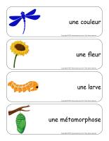 Étiquettes-mots géants-Les libellules-3