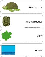 Étiquettes-mots géants-Les tortues