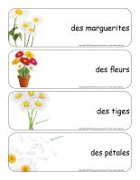 Étiquettes-mots géants-Marguerites-1