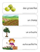 Étiquettes-mots géants-Petits fruits-2