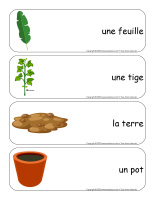 Étiquettes-mots géants-Plantes-1