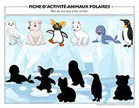 Fiches d'activité-Animaux polaires