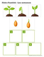 Fiches d'activité-Les semences